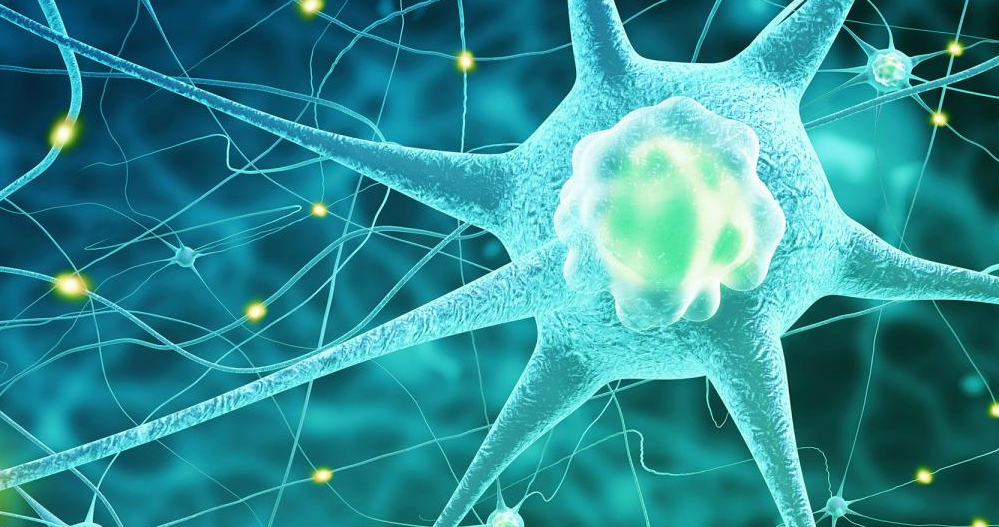 nervous system can transmit information across multiple generations